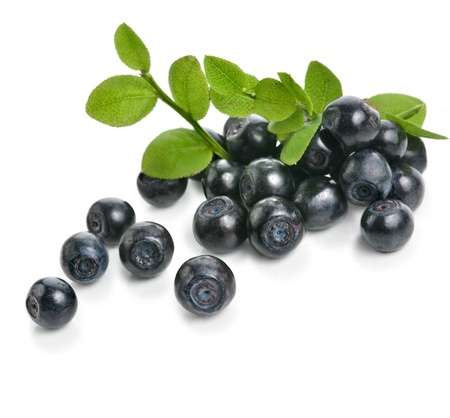 blueberry isolated
