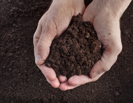 earth handful: Hand holding soil surface top view