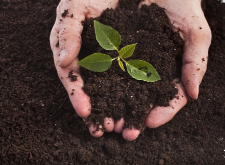 earth handful: Hands holding sapling in soil surface Stock Photo