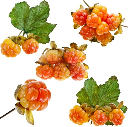 Collection set of cloudberry close up isolated on white background Stock Photo - 20137361