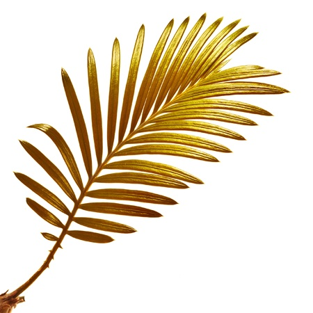 Single leaf branch of palm tree isolated on white background photo