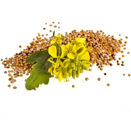 Mustard seeds heap and mustard flower isolated on white background photo