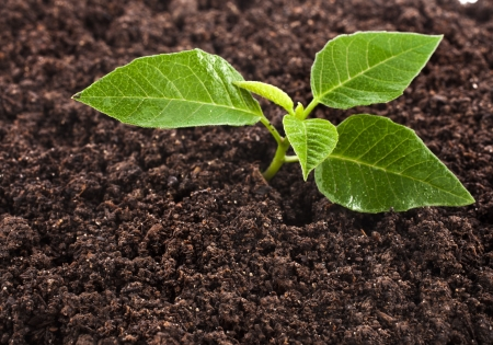 Seedling green plant surface top view textured background photo