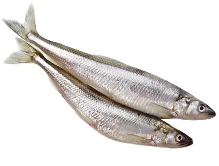 sprat: fresh smelts Baltic fish isolated on white background Stock Photo