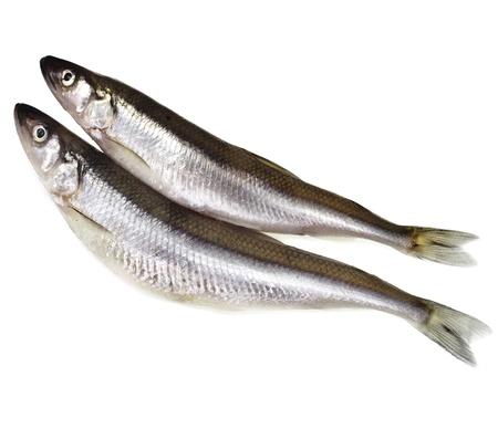 smelt: fresh smelts fish   Osmerus eperlanus  isolated on white background