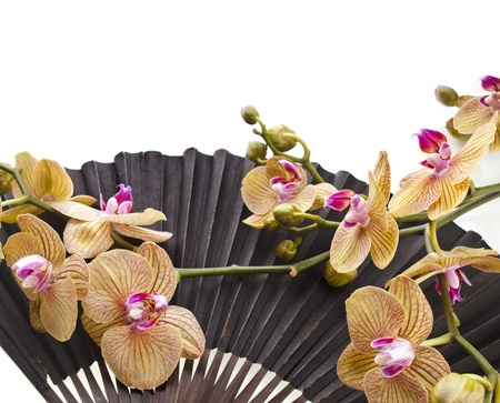 paper folding: Fresh Blossom Orchids in Age Black Decorative Japanese Paper Fan Isolated on white background