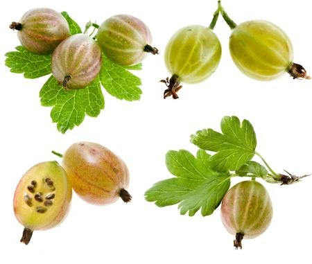 grosella: Conjunto Colecci?n de la grosella espinosa, con hojas aisladas sobre fondo blanco