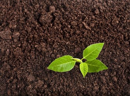 実生植物は緑の植物表面上織り目加工の背景を表示します。