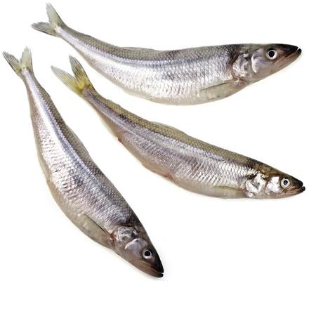 smelt: fresh smelts fish isolated on white background