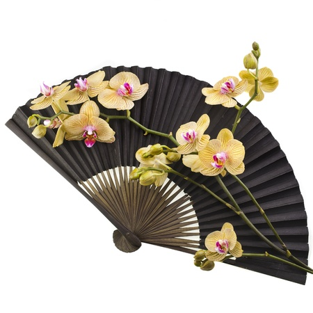 paper folding: Beauty Black Japanese Paper Fan with Fresh Flower Orchid Isolated on white background