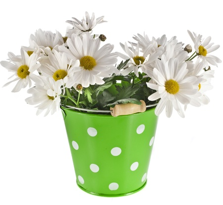 flowerpots: bouquet of beautiful daisies flowers in a bucket isolated on a white background