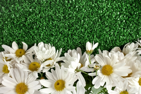 artificial flower: border of chamomile flower on artificial green grass isolated on white background