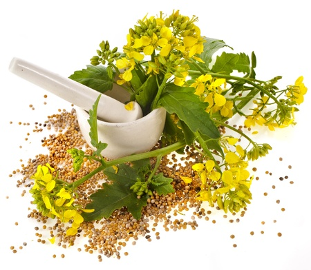 oilseed rape: mortar with pestle and flowering mustard isolated on white background Stock Photo