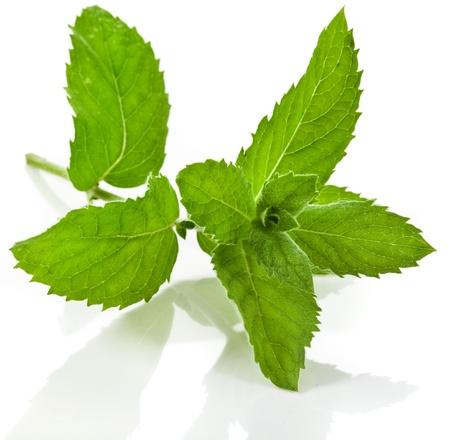 Fresh green mint close up macro shot isolated on white background photo