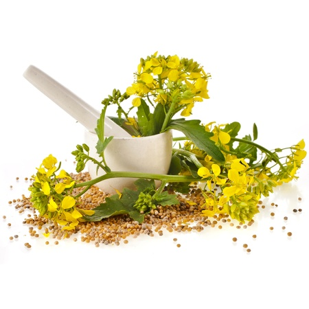 mustard plant: mortar with pestle and flowering mustard isolated on white background Stock Photo