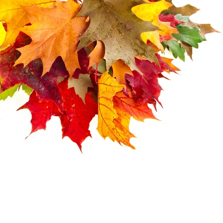 Border of colored falling leafs maple on white background Stock Photo - 21177644