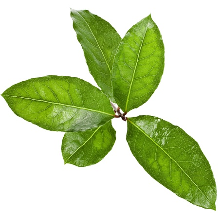 Aromatic Bay Laurel leaves close up isolated over white background photo