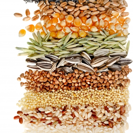 Cereal Grains and Seeds   Rye, Wheat, Barley, Oat, Sunflower, Corn, Flax, Poppy, border closeup on white background Stock Photo