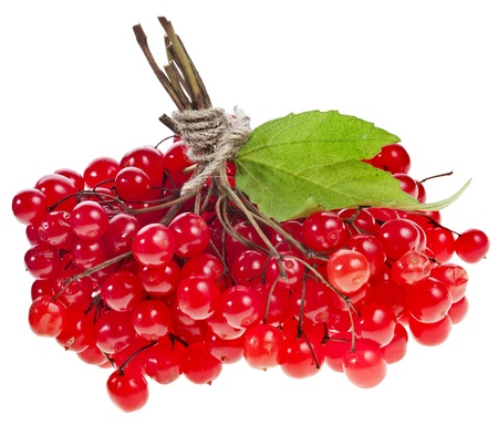 Red Berries of Viburnum  Guelder rose  isolated on white photo