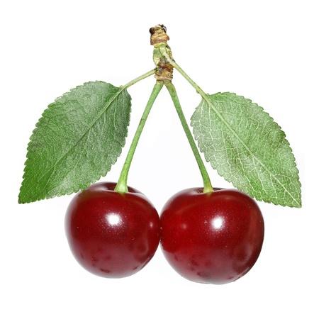 sour cherry: two cherries Stock Photo