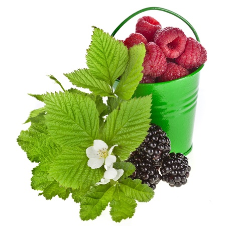 bramble: Flowering forest berries in gren bucket isolated on white background