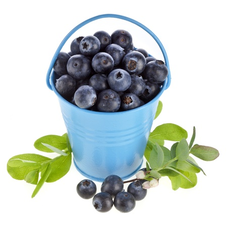 fresh ripe blueberry berries with flower bloom in a blue color bucket isolated on white background photo