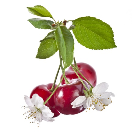 sweet cherries isolated on white background photo