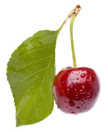 separate: close up macro shot , one fresh cherry isolated on white background