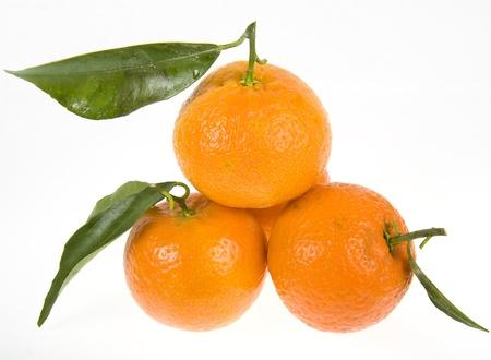 tangerine tree: mandarines   tangerine   on a white background