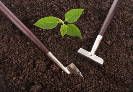 turba: Suelo de tierra superficial de cerca con herramientas de jardinería y plántulas verde Foto de archivo