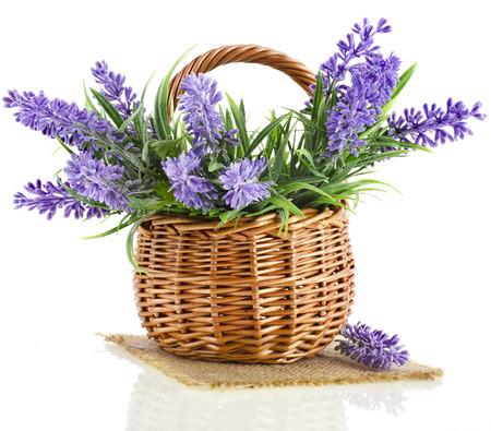 バスケット ラベンダーの花を持つ植物で孤立した白い背景 写真素材