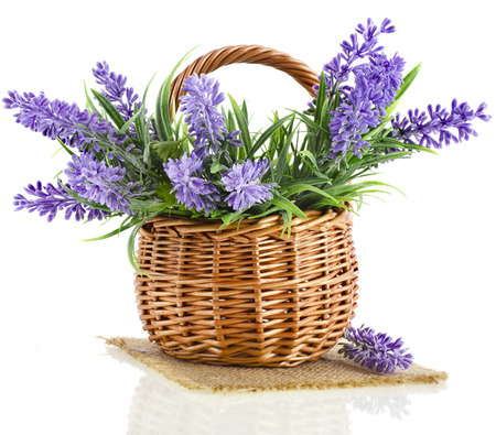 mand met lavendel plant geïsoleerd op witte achtergrond Stockfoto
