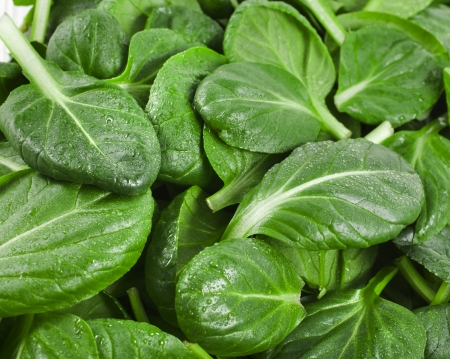 fresh green leaves spinach or pak choi surface close up photo