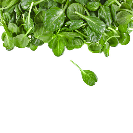 spinach salad: border of fresh green leaves spinach or pak choi isolated on a white background Stock Photo