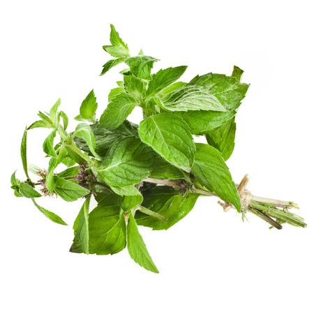 origanum: Oregano or Marjoram Herb  origanum majorana   sheaf isolated on white background Stock Photo