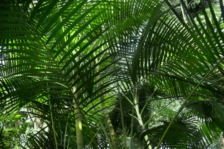 Tropical forest with palm plants                            photo