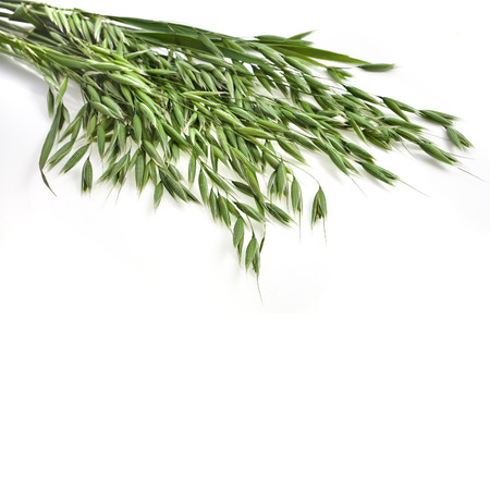 bundle of fresh oat plant close up isolated on white background photo
