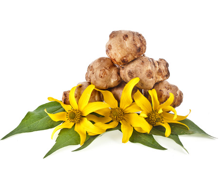 Jerusalem artichoke  Helianthus tuberosus  with flower and leaves stem isolated on a white background photo