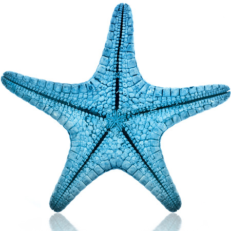 Enige Blauwe zeester op een witte achtergrond Stockfoto