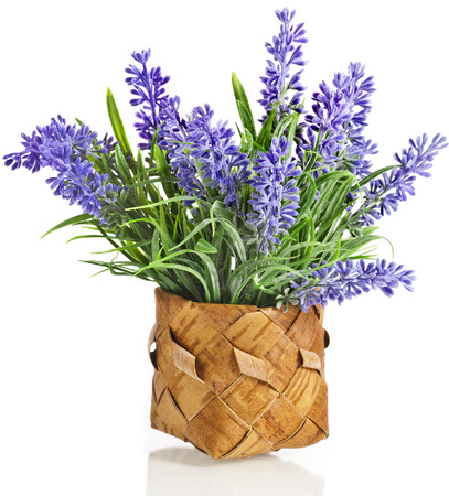 sprigs: bouquet purple Lavender in wooden basket isolated over white background