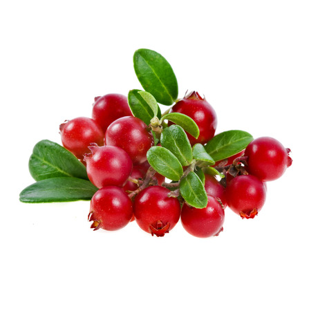cranberry: cranberry cowberry bush branch isolated on white background Stock Photo