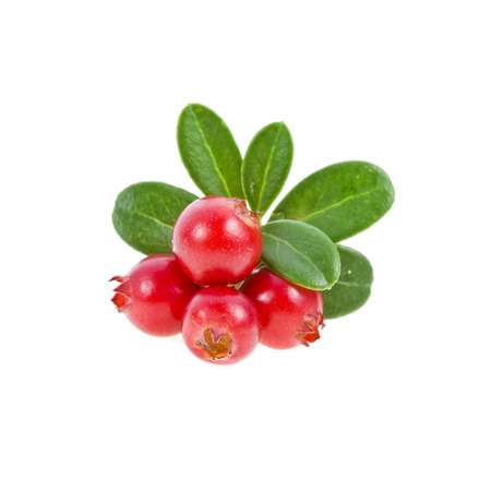 cranberry isolated on white background photo