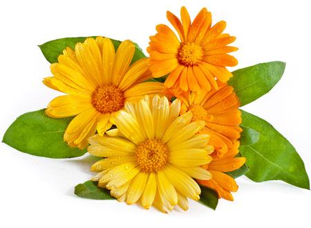 calendula: orange flower bouquet of calendula close up macro Isolated on white background Stock Photo
