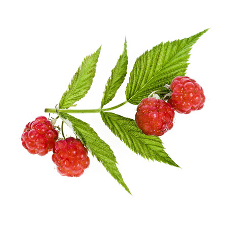 raspberries close up macro shot isolated on white background Stock Photo