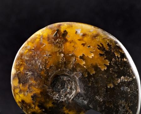 uncut: beautiful ammonite stone close up surface isolated on black background Stock Photo
