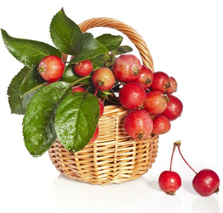 Apple fruits in wicker basket Isolated on a white background photo
