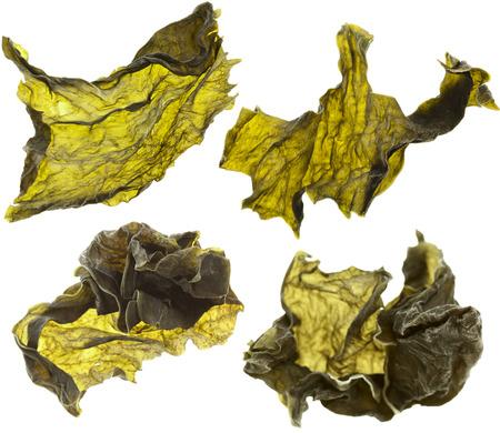 alga: dried seaweed kelp set close up Isolated on white