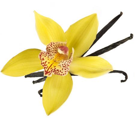 bönor: vanilj orkidé pod isolerade på vit bakgrund Stockfoto