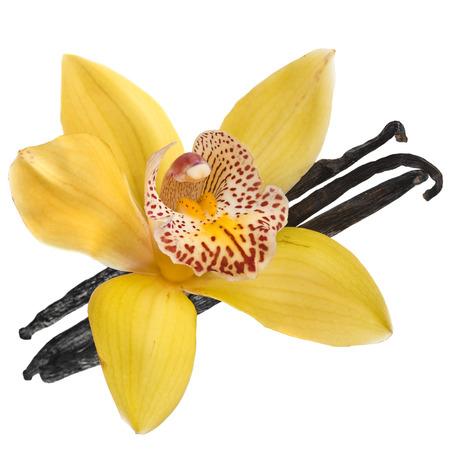 flor de vainilla: orquídea vainilla vaina aislados en fondo blanco