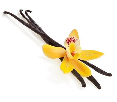 orquídea vainilla vaina aislados en fondo blanco